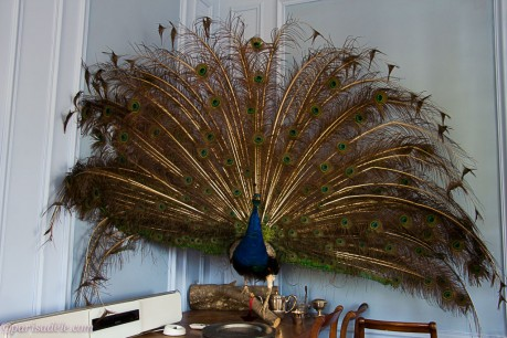 maison dhotes provins peacock