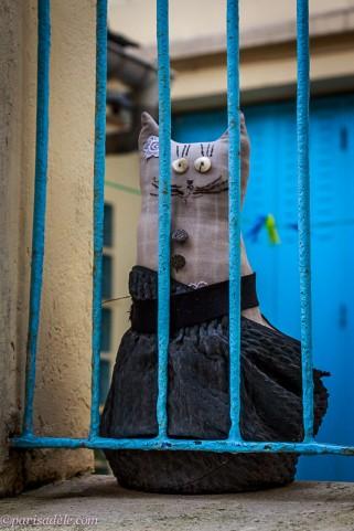 cat passage boudin