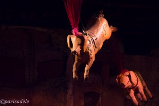 pigs fly museum arts forains paris carousels