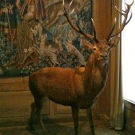 Hunting Down an Unusual Museum