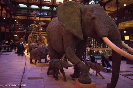 Mus 233 Um National D Histoire Naturelle Paris Ad 232 Le